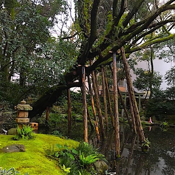 浮月楼・庭