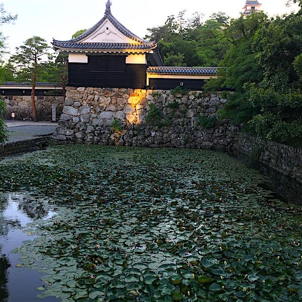 高知城蓮池