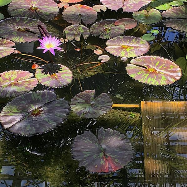 牧野植物園温室5