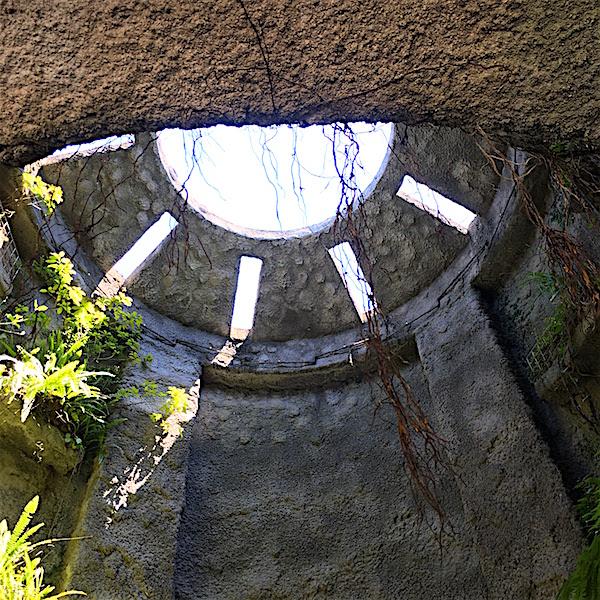 牧野植物園温室1